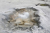 USA. Wyoming. Parc de Yellowstone. Biscuit Basin. Shell Spring en ébullition.