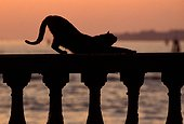 Alley cat stretching on a bridge Venice Italy