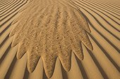 Run of sand in the dunes United Arab Emirates