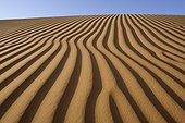 Dune in the sand desert  United Arab Emirates