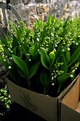 Bits of lily of the valley for May 1 [AT]