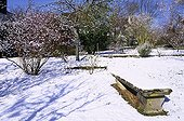 Dogwood Apple tree and others in a snow-covered garden France