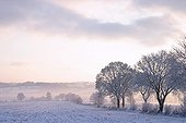 Countryside under snow Isigny-le-Buat Manche France