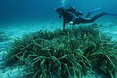 Scuba diving and Posidonia Cape Caccia Sardinia