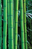 Bamboo stems at the Bambouseraie de Prafrance