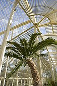 Greenhouses of the botanical garden of Glasnevin Dublin Ireland