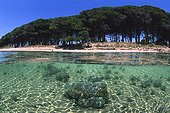 Pinewood on a beach of Porto Conte Alghero Sardinia Italia