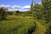 Trail in tall grass Provence France