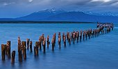 Old abandoned pier in the harbour of a village Chili ; Cormorants have nested on the pier.