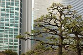 Pruned trees in a city park in Tokyo Japan