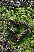 Heart made with acorns on moss in a garden in winter