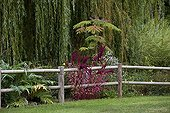 Weeping willow and barrier Garden Martels France