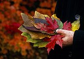 Collect of leaves in a garden in autumn