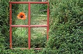 Decor window onto a garden with a poppy