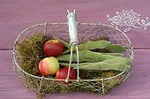 Apples and seeds of Glycine on moss in a basket