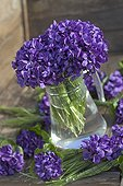 Bouquets of sweet violets in a vase France