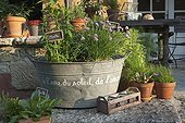 Herbs plants in a basine with slate signs France