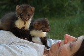 Young beech Martens on their adoption mother France