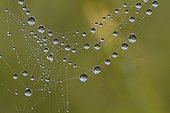 Dewdrops on a spider web in the early morning France