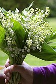 Lily-of-the-valley bouquet in spring