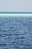 Sandbank in the Indian Ocean in the Maldives