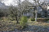 Apple and pear trees in winter in a garden