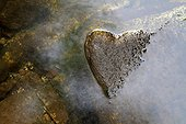 Heart formed by the water level of a river stone France