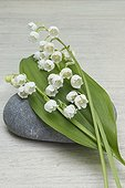 Little bouquet of lily-of-the-valley