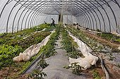 Greenhouse for organic plantation in France