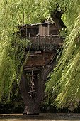Shed on a weeping willow over a river