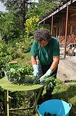 Making of nettle manure in a garden ; Rich in nitrogen, extract of fermented nettle or nettle manure is an excellent stimulant for start of season.