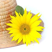 Sunflower flower straw hat on white background