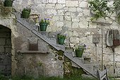 Plants in pot on a stone stairs