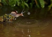 Snail and water drop - Spain