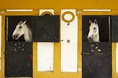Mares in their stable - Feria del Caballo Andalusia Spain