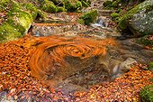 Dead leaves swirling in a river - Bauges Alps France
