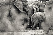 Elephants at water point - Addo Elephant South Africa