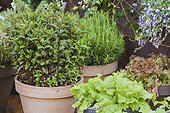 Vegetables and aromatics in pot on a garden terrace