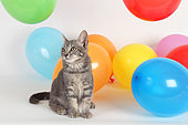 Kitten sitting next to inflatable balloons of all colors on white background