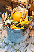 Halloween decorations, colocynth, squashes and a pumpkin