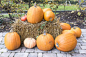 Pumpkins on a straw bale in autumn, Germany