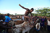 The young Aïke heads off running and jumps over the first animals. He has to make four roundtrips, but out of bravado, he doesn't finish his turns so that they are not counted and thus enhances his prestige. There are nearly twenty-five cows and bulls in the row. Aïke does not cease to jump from backbone to backbone. The tension amongst the crowd is palpable. The Honey Tribe, Omo valley, Ethiopia