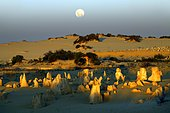 Full moon over pinnacle limestone formations in the evening, Nambung National Park, Western Australia, Australia, Oceania